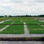 Manual de boas práticas para o cultivo do arroz na Bacia do Prata