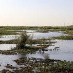 Calidad del agua en la Cuenca del Plata
