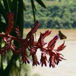 Proyecto Piloto Demostrativo. Conservación de la biodiversidad íctica en una zona regulada del río Paraná