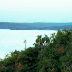 Selva Misionera Paranaense